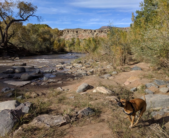 Bugsy by the Virgin River
