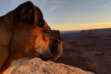 bugsy at sunset on the west rim