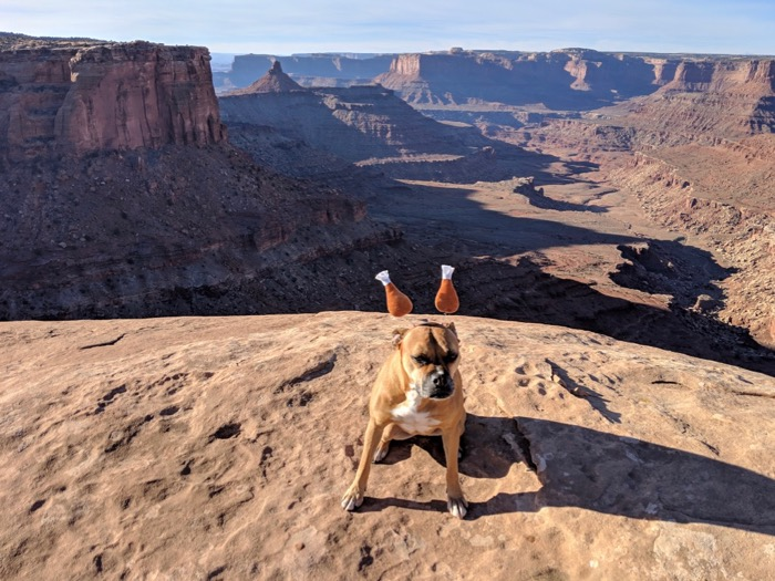 bugsy in a turkey headband, west rim trail dead horse point