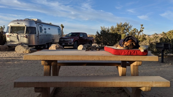 Bugsy and the Airstream at Ryan Campground in Joshua Tree