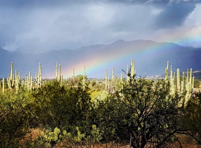rainbow over cacti in Saguaro National Park