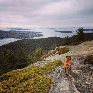Bugsy hiking in Acadia National Park