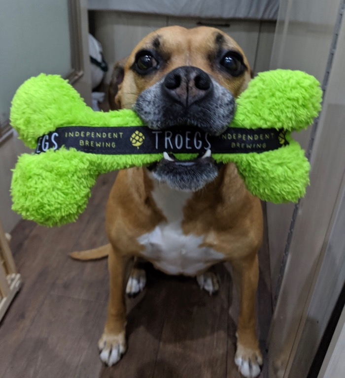 bugsy with troegs dog toy