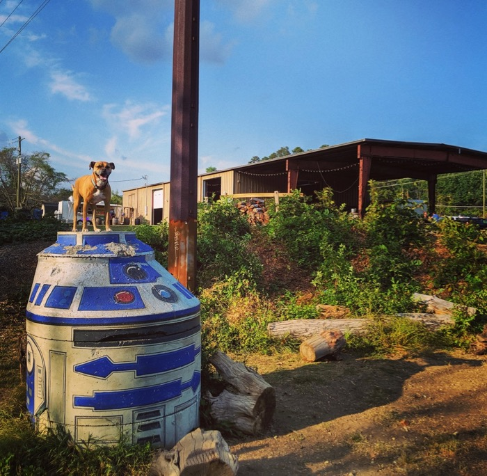 Bugsy and R2-D2 at Zillacoah Beer Co