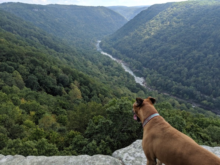 New River view from Endless Wall hik