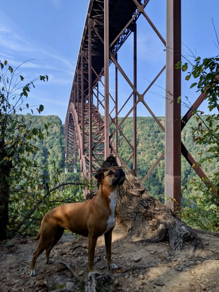 Bugsy under the New River Gorge Bridge