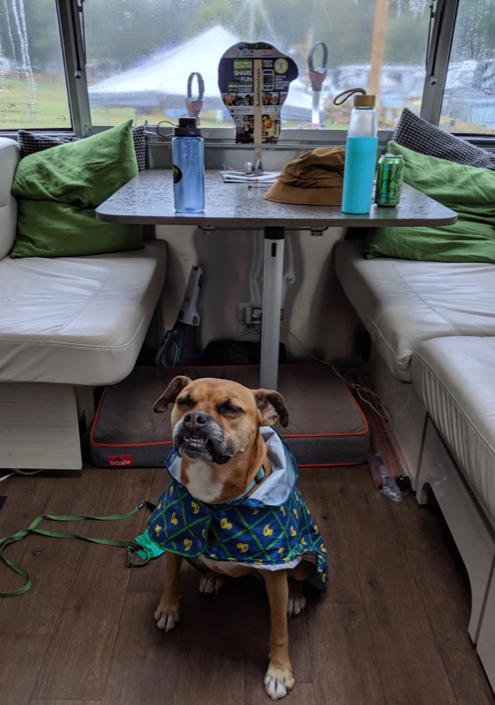airstream dog in her airstream on a rainy day