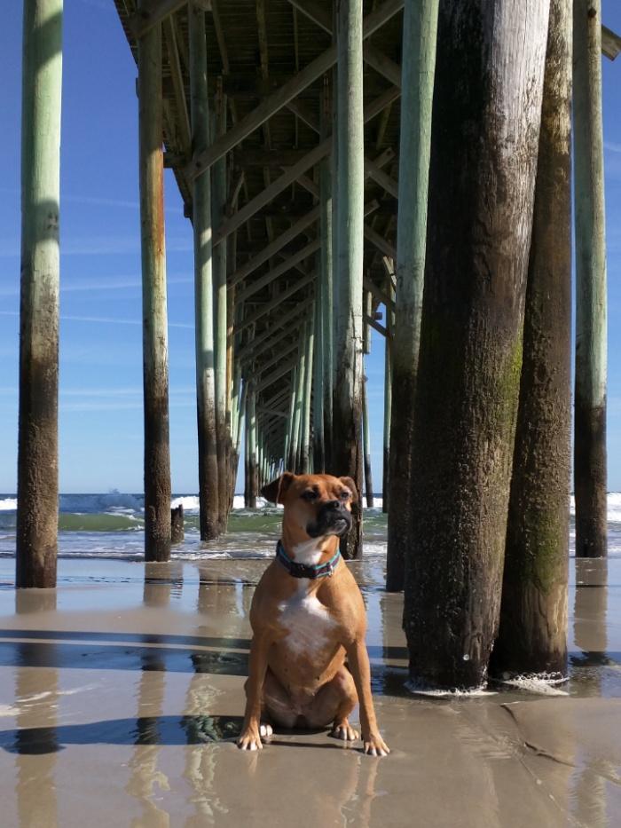 Bugsy at the beach