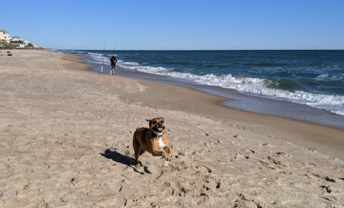 bugsy running on Vilano Beach