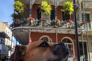 Bugsy in the French Quarter