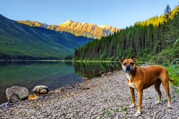 Bugsy at Stanton Lake, Flathead National Forest