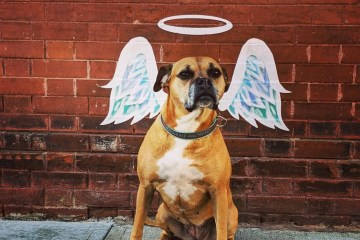bugsy with angel wings in Fargo