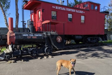 Bugsy and a Montana Western Railway train car