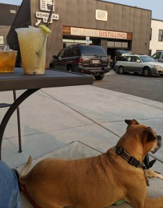 Bugsy and cocktails at Wildrye Distilling