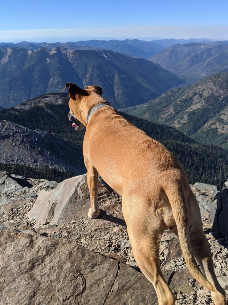 bugsy at the summit of scotchmans peak