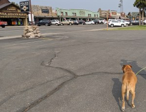 Bugsy shopping in West Yellowstone
