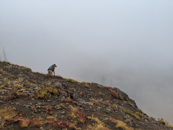Bugsy hiking on a foggy day in Caribou-Targhee National Forest