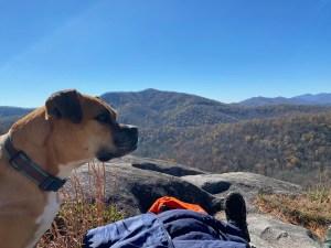 Bugsy hiking near Asheville