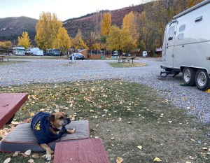 Bugsy at the campground in Durango
