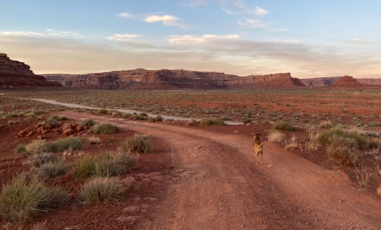 Bugsy running through Valley of the Gods