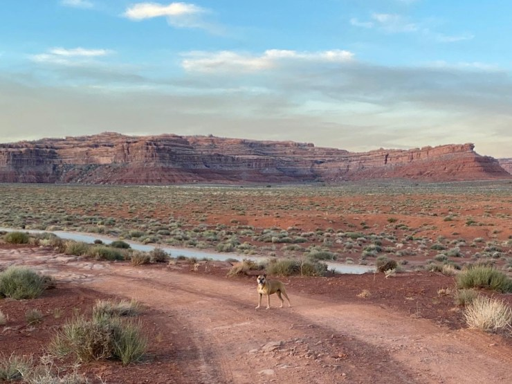 Bugsy in Valley of the Gods
