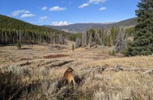 Colorado trail in Breckenridge