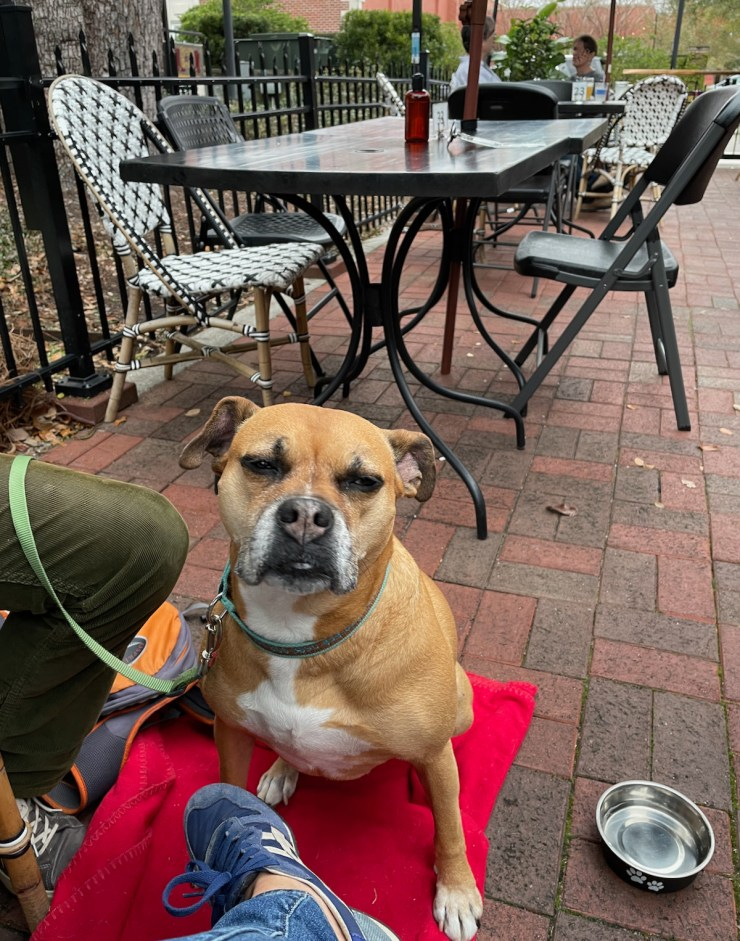 Bugsy on the patio at Mosaic in Ocean Springs