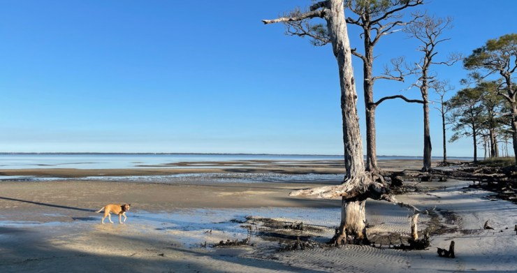 Bugsy on the beach at St George Island State Park