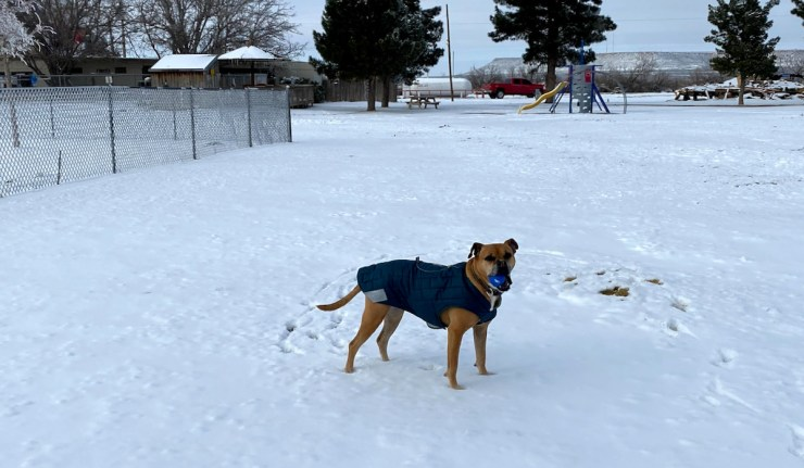 Bugsy in the snow in Fort Stockton