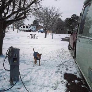 Bugsy at Fort Stockton RV Park