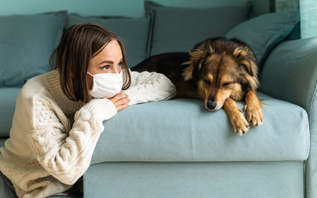 6 Easy Ways To Prevent Springtime Allergies in Your Pet