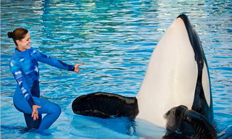 Dieses Bild wird es in Zukunft in den Parks von SeaWorld nicht mehr geben.