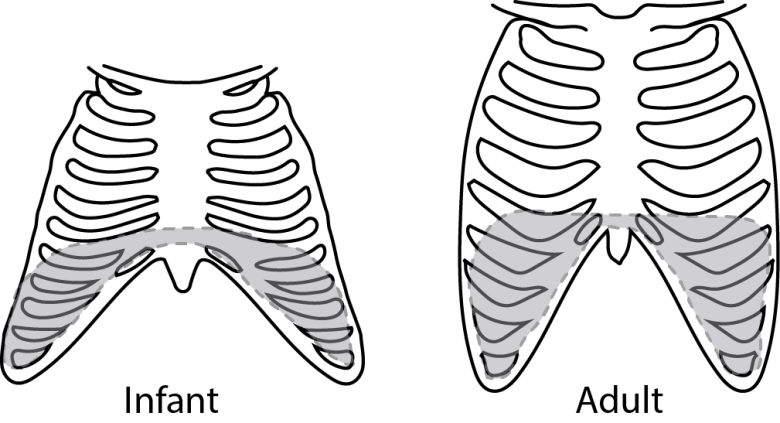 comparison infant vs adult rib angulation