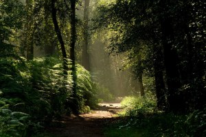 Biggest Forests In The World