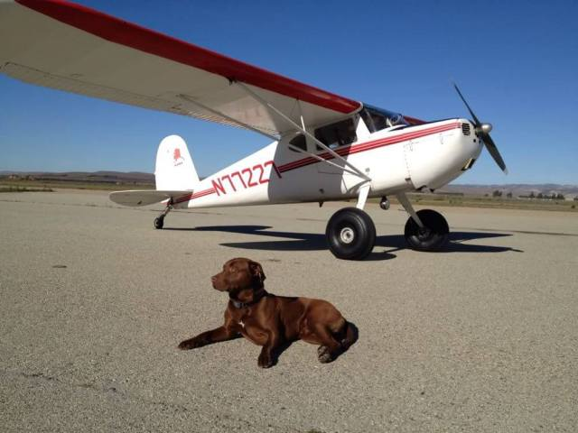 Dogs That Can Go On Airplanes