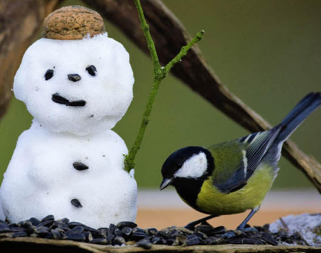 Vögel Füttern – Aber Richtig Lahr Badische Zeitung