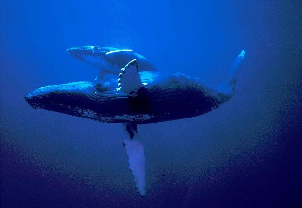 Wale Die Knige der Meere  Neues fr Kinder  Badische