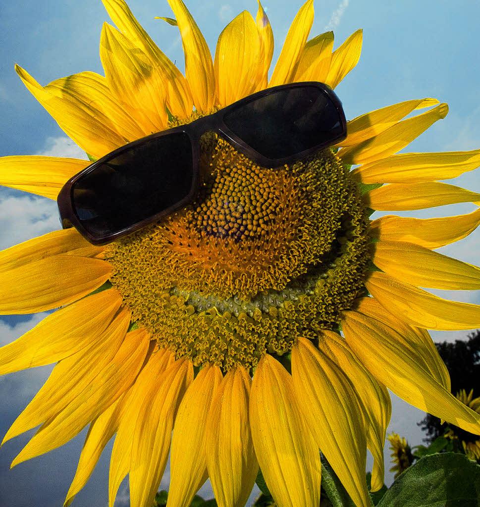 Sonne satt und 36 Grad im Schatten  Ettenheim  Badische