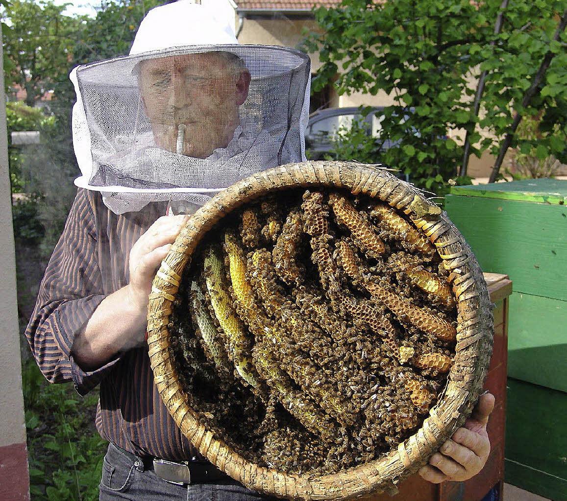 Nur keine Angst vor Bienen  March  Badische Zeitung