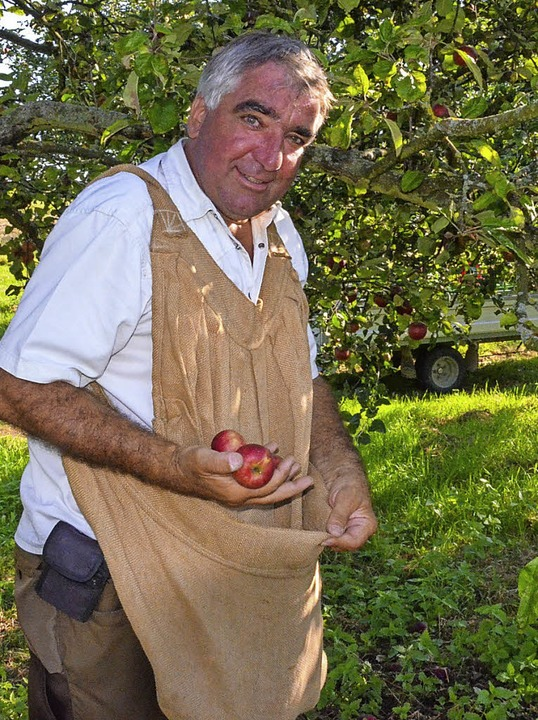BZ-Bericht: Bei der Apfelernte mit Martin Geng