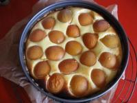 Quark Aprikosen Kuchen - Rezept mit Bild - kochbar.de