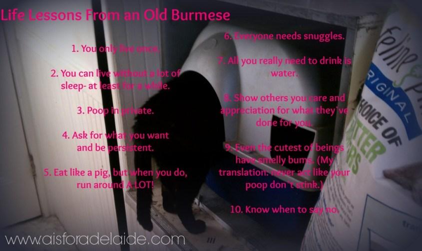#aisforadelaide #blackcat #burmesecat #lifelessons