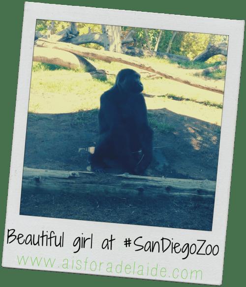 #aisforadelaide #gorilla #sandiego #sandiegozoo #zoo #travel #california