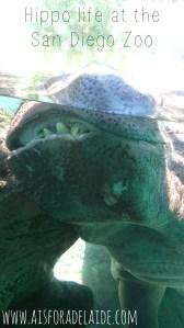 #aisforadelaide #sandiegozoo #travel #hippo #hippolife #california