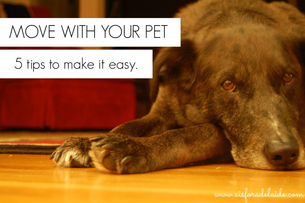 5 tips to moving with your pet! #52weeksA4A Week 35