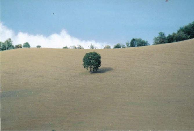 treeitaly