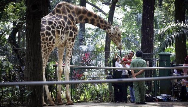 10 Gambar Kebun Binatang Ragunan Jakarta Harga Tiket