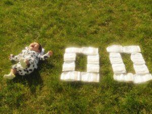 100日の寝相アート