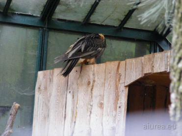 Fauna-Schonbrunn_0043