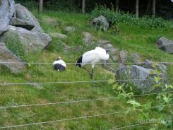 Fauna-Schonbrunn_0048